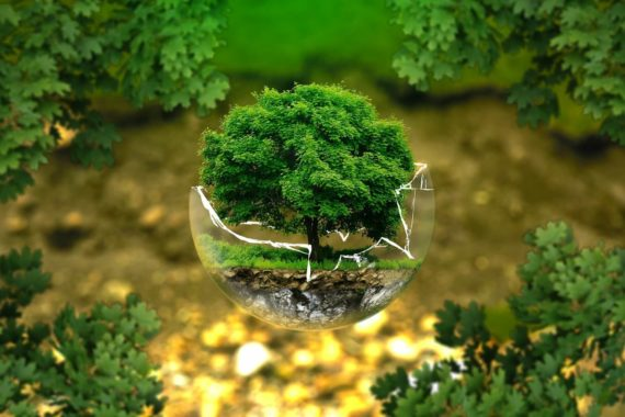 A small green tree sitting within a glass container